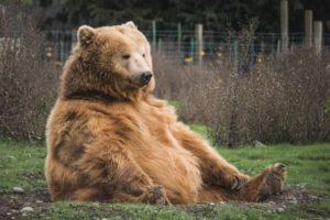 Three Bears Story Time @ Sheldon Jackson Museum